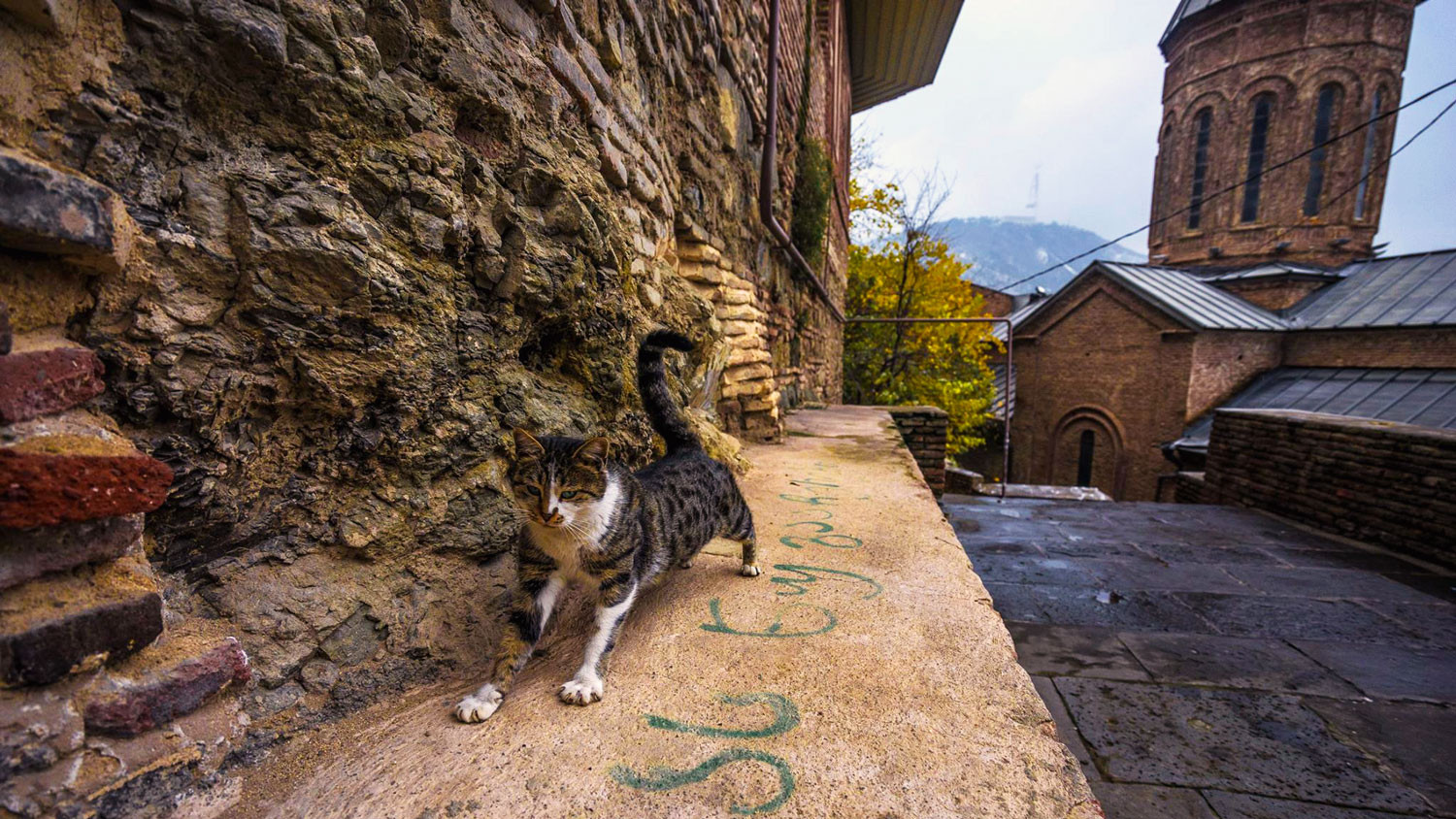 Cat in old Tbilisi