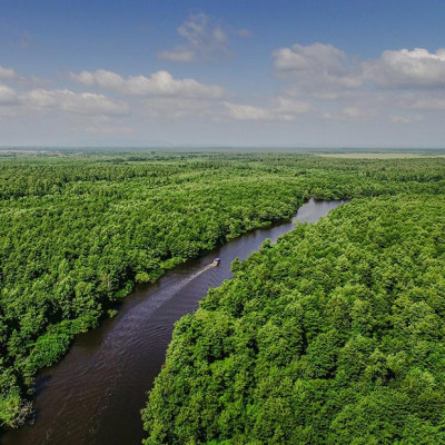 Colchis Wetlands and Forests