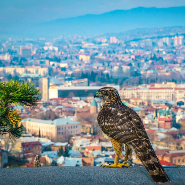 Tbilisi Half Day Private Tour