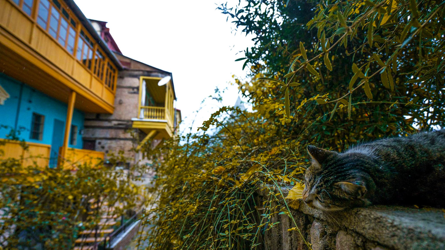 Cat in Tbilisi